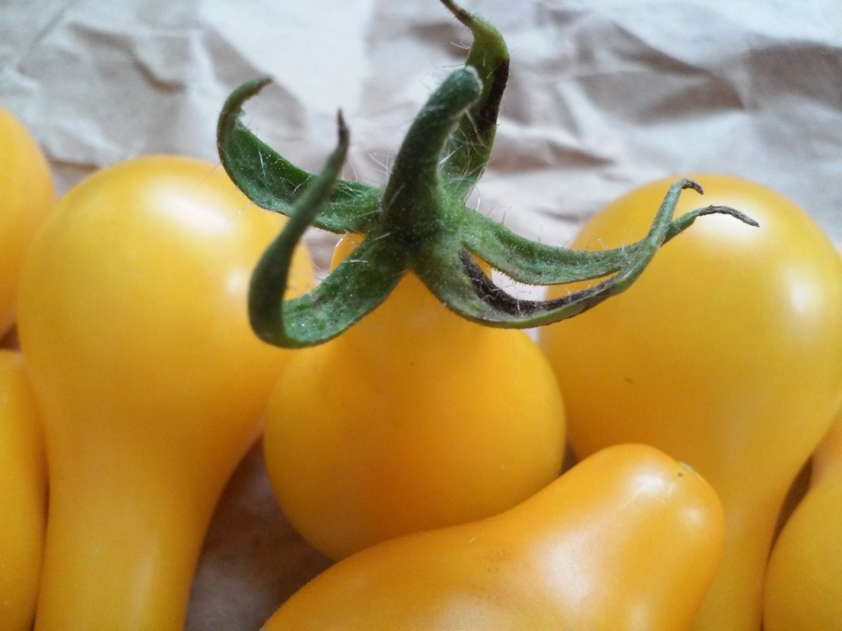 Closeup Yellow Tomato