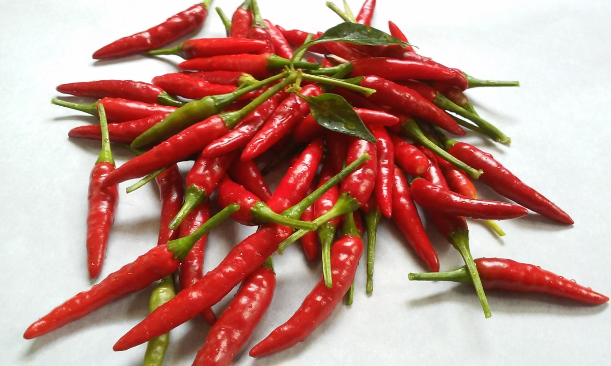Freshly Picked Cayenne Peppers