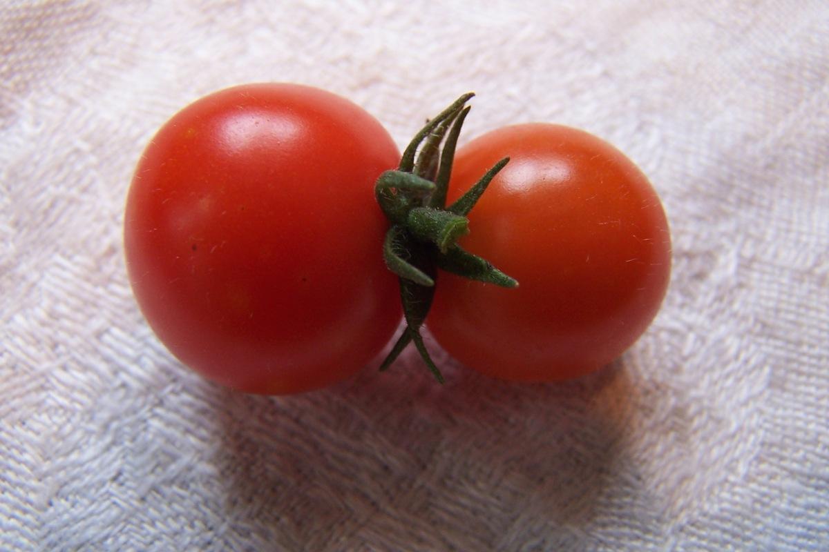 Tomato Twins