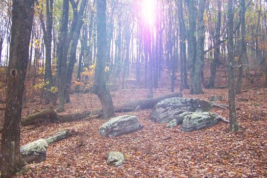 Sun shining through the trees on Kennesaw Mountain