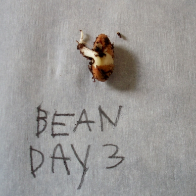 Bean Day 3