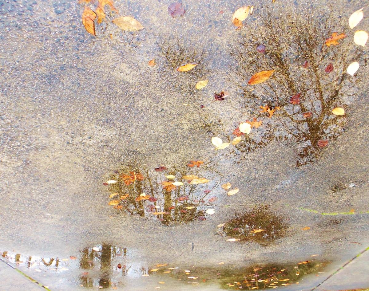 reflective season
