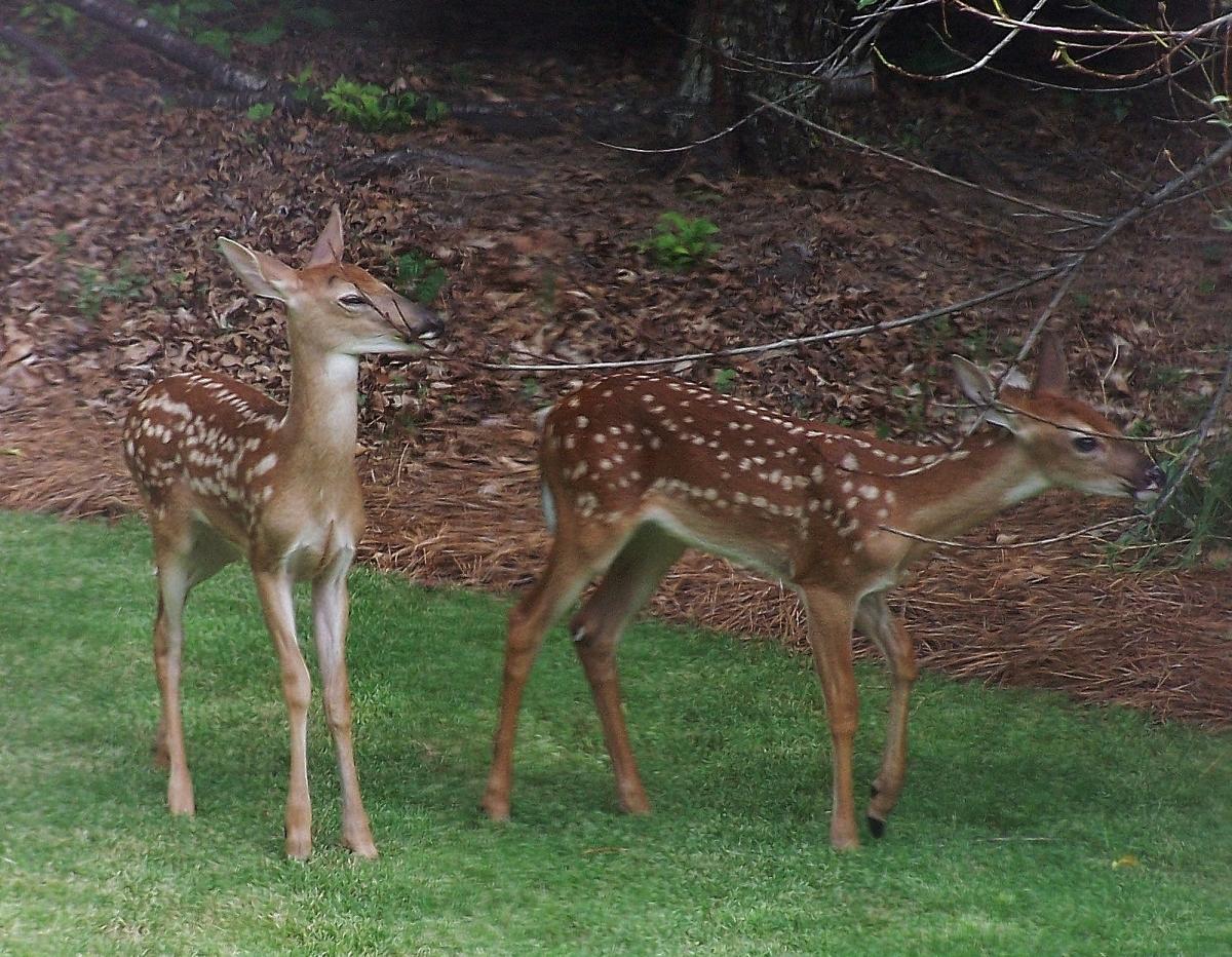 deer lunch