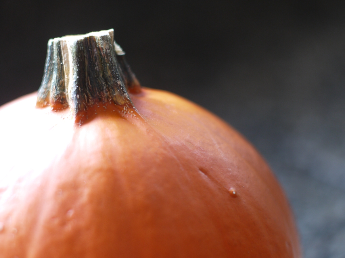 sugar pie pumpkin stem